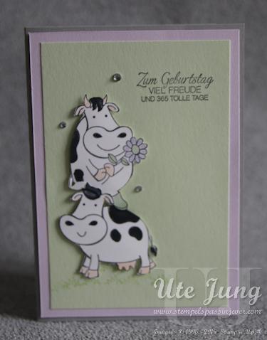 Kühe im Doppelpack